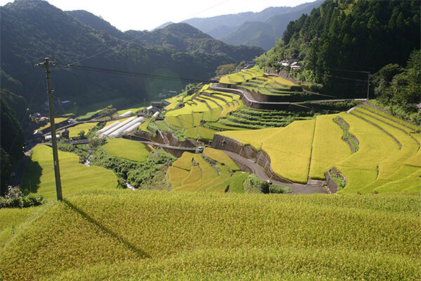 高知県津野町 棚田の風景