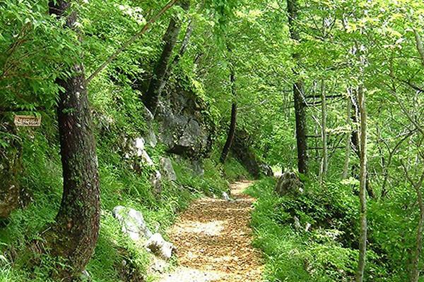 高知県津野町の森林セラピーロード